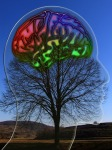 Brain superimposed on tree